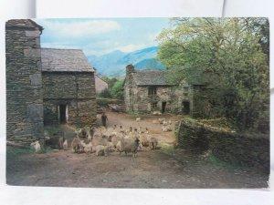 Vintage Postcard A Lakeland Farm Cockermouth Cumbria 1970s