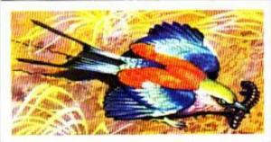 Brooke Bond Trade Card Tropical Birds No 15 Lilac-Breasted Roller