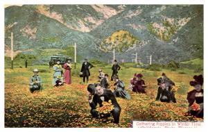 California , Tourist Gathering Poppies  in winter ,   1cent Balboa Stamp