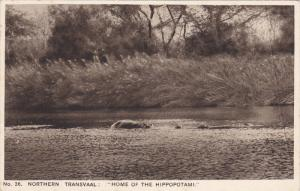 Hippopotamuses , Northern Transvaal : Home of the Hippopotami , 10-30s