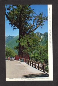Sacred Tree Holy EW Crossway Taiwan Republic of  China Postcard