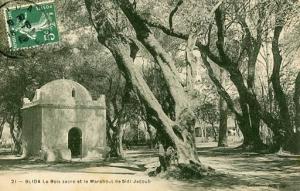 Algeria - Blida. Sacred Woods & Marabout de Sidi Jacoub, Muslim Leader and Te...