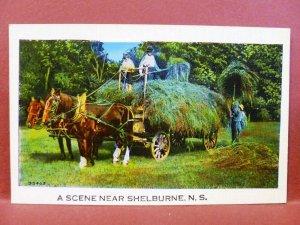 Postcard Canada Nova Scotia Shelburne A Scene Near Shelburne