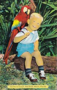 Florida Miami Young Boy Holding Macaw Parrot Jungle Red Road