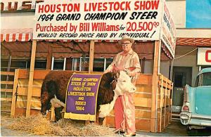 Grand Champion Steer at Houston Livestock Show,Cost $20,500 in 1964, Texas TX