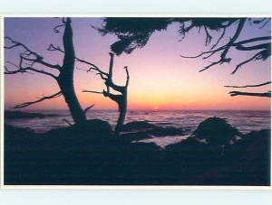 Pre-1980 NICE SILHOUETTE OF TREES AT SUNSET Monterey -17 Mile Drive CA hp5751