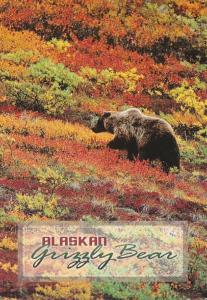 Alaska Alaskan Grizzly Bear 1998