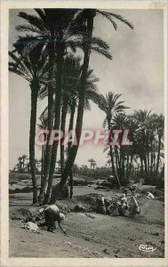 Modern Postcard Scenes and types of North Africa (Morocco) a corner of the grove