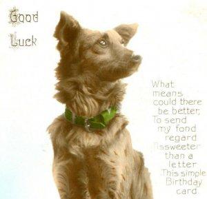Antique Birthday card postcard RPPC dog hand coloured photograph #66