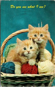 KITTENS Orange Tiger Stripe Tabby  Yarn Basket DO YOU SEE WHAT I C Postcard Cats