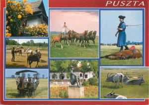 Post card Hungary greetings from Puzsta various types and scenes