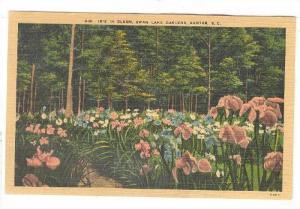 Iris in bloom, Swan Lake Gardens, Sumter, South Carolina,30-40s