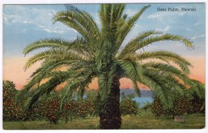 Date Palm, Hawaii