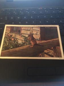 Vtg Postcard: Chipmunk Universal Pet in the Rockies