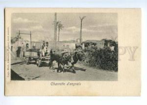 172317 EGYPT Charrette d'engrais Fertilizer cart Old postcard