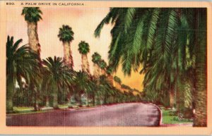 A Palm Drive in California Palm Tree Postcard