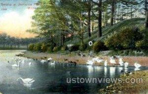 Swans, Jamaica Pond - Jamaica Plain, Massachusetts MA