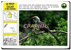 Map Le Petit Hornbill A Red Bird Beak WWF