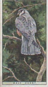 Wills Vintage Cigarette Cards Life In The Tree Tops Series No. 22 Male Hobby ...