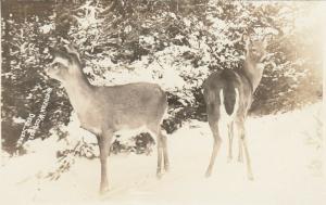 RP: WISCONSIN, 1910s; Deer Scene