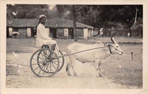 India Native Man, Bullock Bandy, oxen vehicle