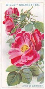Wills Vintage Cigarette Card Roses A Series 1912 No 20 Anne Of Geierstein