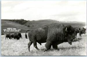Wind Cave National Park South Dakota RPPC Photo Postcard BUFFALO BULL c1950s
