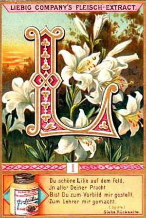 Liebig Trade Card S526 Flowers &  Initials No 1 L Lily