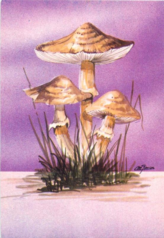 Mushrooms postcard LEPIOTA CLYPEOLARIA toxic shield dapperling shaggy-stalked
