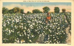 Fine Field of Cotton in Dixieland - Agriculture - Linen