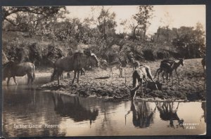 South Africa Postcard - In The Game Reserve, Transvaal    DC2300
