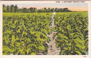 A Southern Tobacco Field