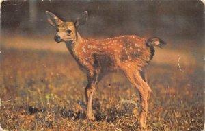 Little Deer Colorado Rockies, USA Deer Writing on back