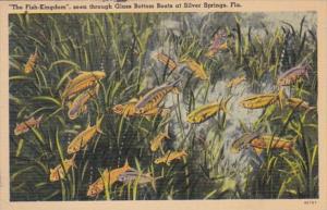 Florida Silver Springs The Fish Kingdom Seen Through Glass Bottom Boats 1940