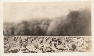 RP: Rabbit Drive , Scott City , Kansas , 1910s