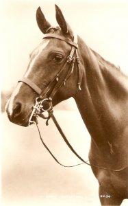 A Horse's Head Nice old vintage English postcard