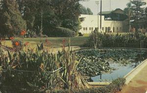 Amerige Park Fullerton California Postcard