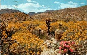 Vintage Desert Flowers Flower of the Southwest Wildflowers Postcard