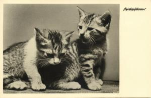 Cat Postcard Kittens (1930s) RPPC (1)