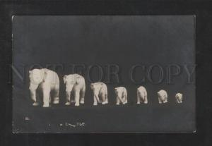 073447 Happy ELEPHANT Family - Figures Vintage PHOTO