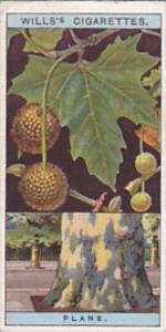 Wills Vintage Cigarette Card Flowering Trees &  Shrubs 1924 No 39 Plane