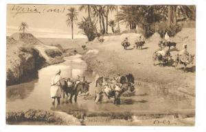 Porteurs d'Eau, Donkeys, Algeria, 00-10s