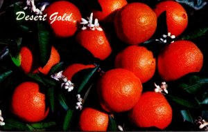 Arizona Oranges Ready For Picking