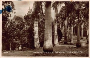 Ghana Gold Coast Assuantsi The Royal Palms Postcard