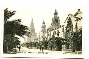 Pan American Expo Avenue of Palms RPPC Postcard