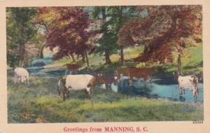 South Carolina Greetings From Manning