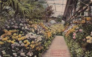 Chrysantheme Horticuitural Hall Fairmount Park Philadelphia Pennsylvania 1910