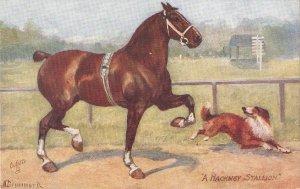 Norah Drummond. A Hackney Stallion Tuck Oiette Man's Best Friend Ser.PC # 9561