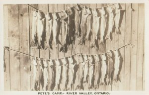RP: Fish , Pete's Camp - RIVER VALLEY , Ontario  , Canada , 1930-40s