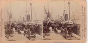 SV: Fleet from deck of VIGILANCIA , 1890s